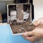 Beware Of These Factors That Cause Termites