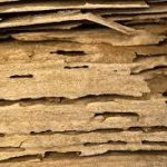 If you have termites, check out these termite treatments