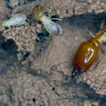 How to get rid of the termites in your house?